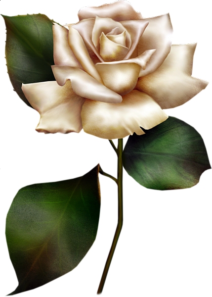 painted white rose clipart flower pictures pinterest rose rh pinterest com white rose clip art images pink and white rose clipart