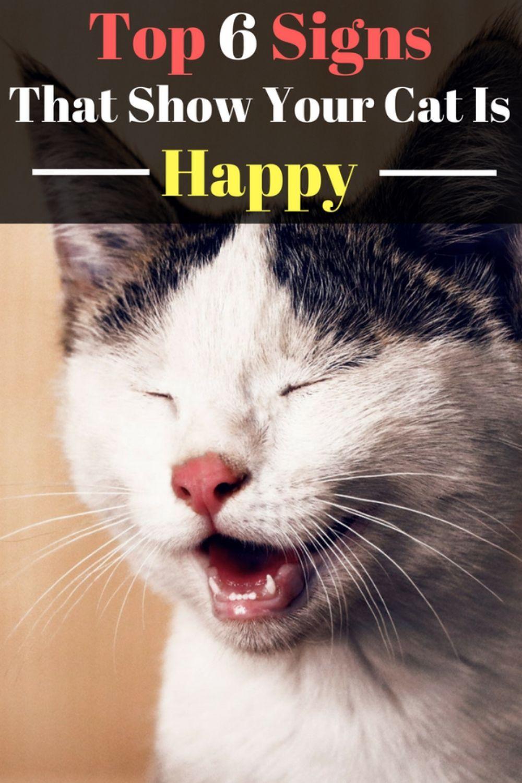 Top 6 Signs That Show Your Cat Is Happy Welfar4us Cat Care Indoor Cat Cat Parenting