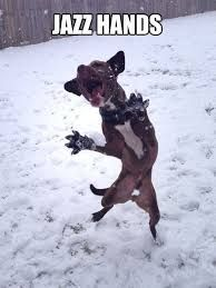 540419962e9e8b52bc6d84c9f3de8f55 image result for dog walking itself meme mamma meme! pinterest
