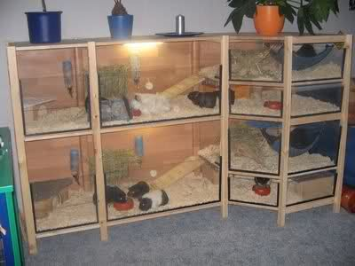 Guinea pig habitat made from Ikea Ivar units