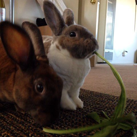 "Cute Emergency on Twitter: ""lady and the tramp bunny version http://t.co/TGFUjTkwXk"""