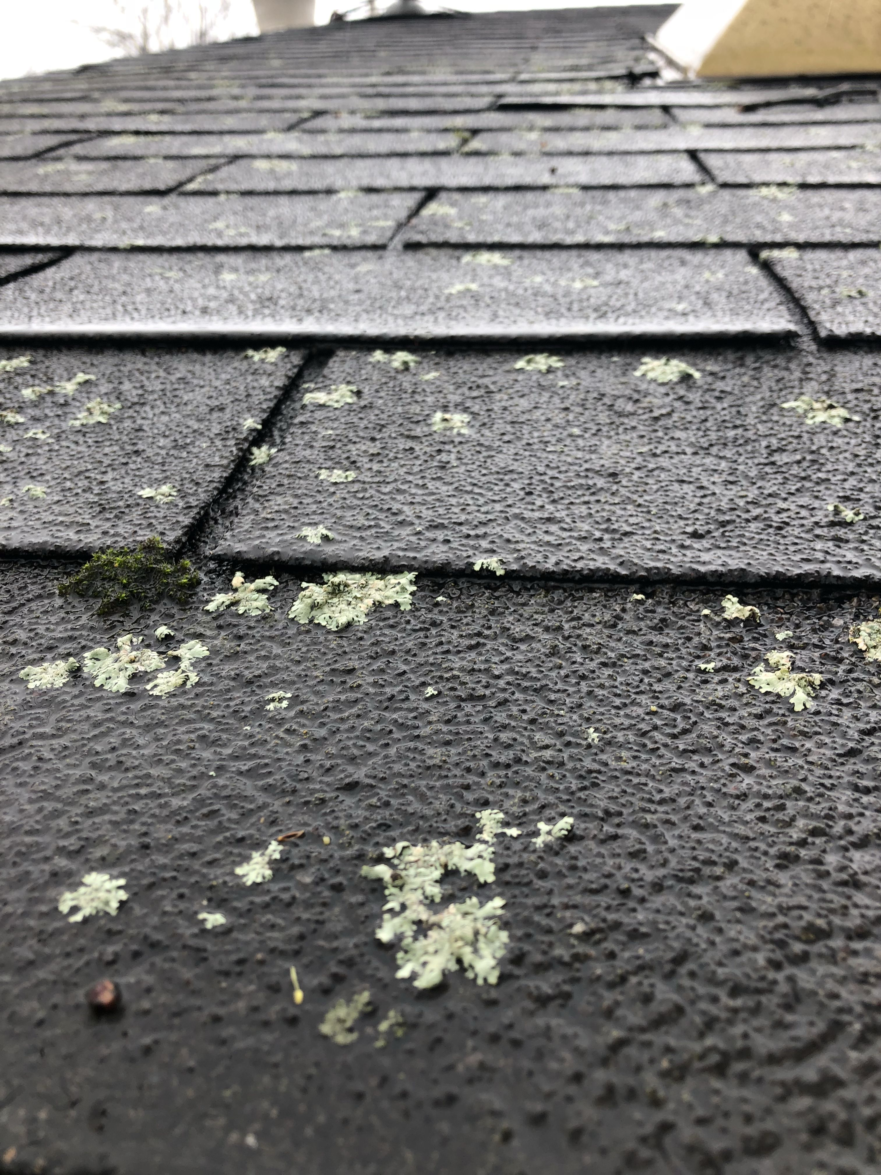 Moss And Lichen Are Signs That Your Roof Is Aging And Deteriorating Lichen Actually Makes Roots And Destroys The Shingles Call T Metal Roof Shingling Roofing