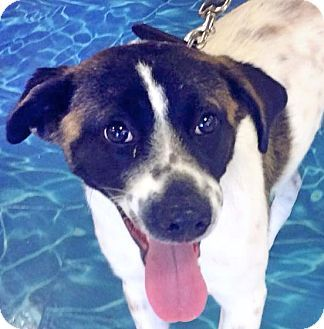 Wilmington Nc Meet Betsy A Dog For Adoption She Is A Quiet
