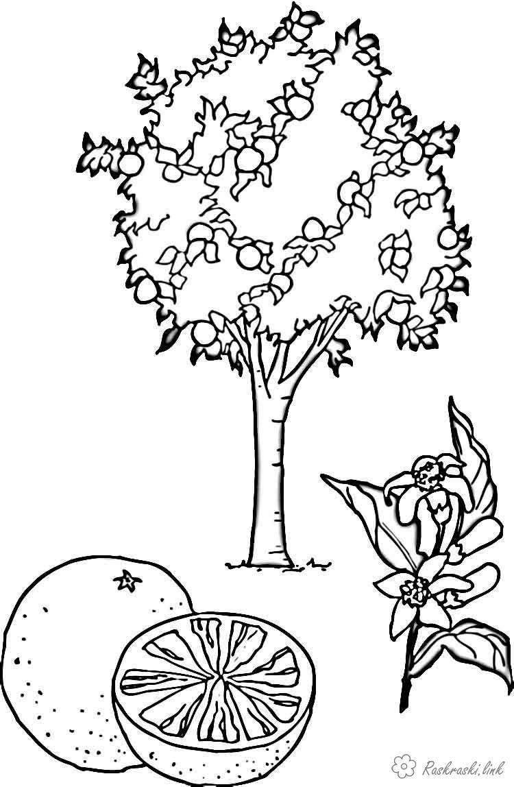 картинка лимонное дерево распечатать том, что