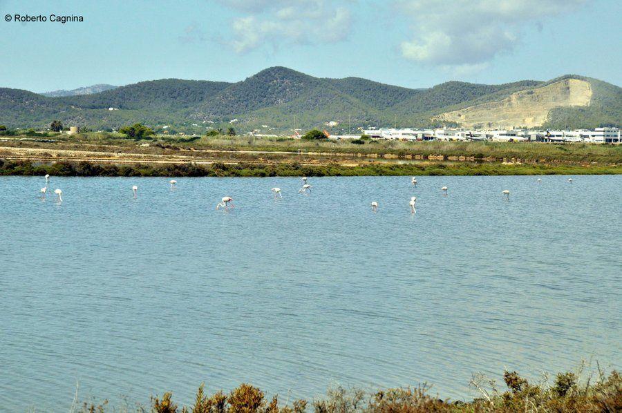 Consigli utili per organizzare un viaggio a Ibiza le saline ed i fenicotteri