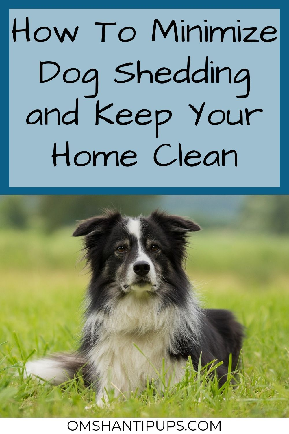 How To Minimize Dog Shedding And Keep A Home Clean Dog Care Tips