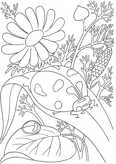 ladybird among flowers coloring page super coloring