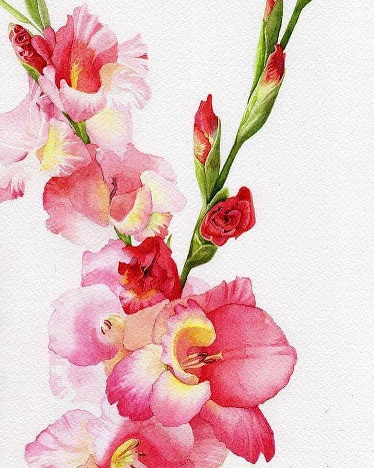 Gladiolut Watercolorstudio Watercolorgallery Watercolorist Watercolorflowers Watercoloris Gladiola Painting Watercolor Flowers Tutorial Floral Watercolor