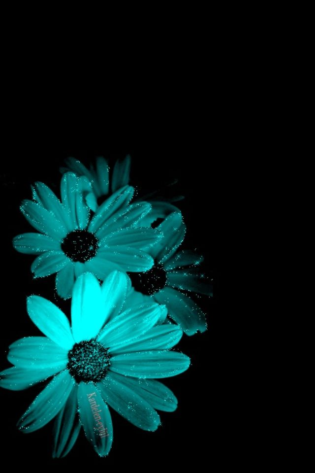 Pin By Habi On Turquoise In 2019 Turquoise Background