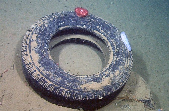 Life on the Ocean Floor Garbage Patch: Photos : Discovery News