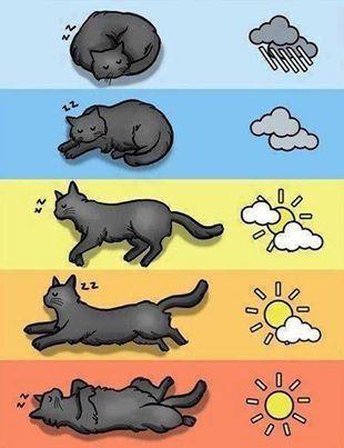 Zuverlässiger Wetterbericht