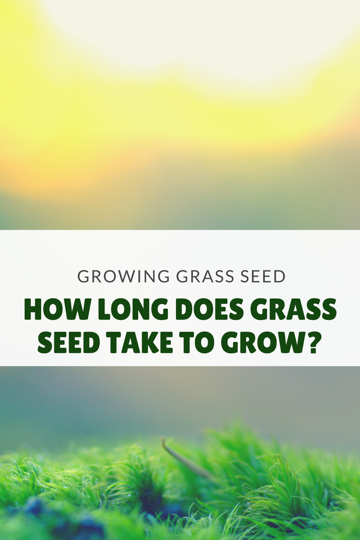 how long does grass seed take to grow? | lawn care | grass