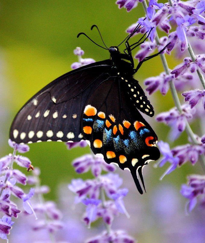 animal symbolism butterfly meaning | candle gazing and