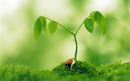 This Picture Represent Rejuvenation Because It Symbolizes