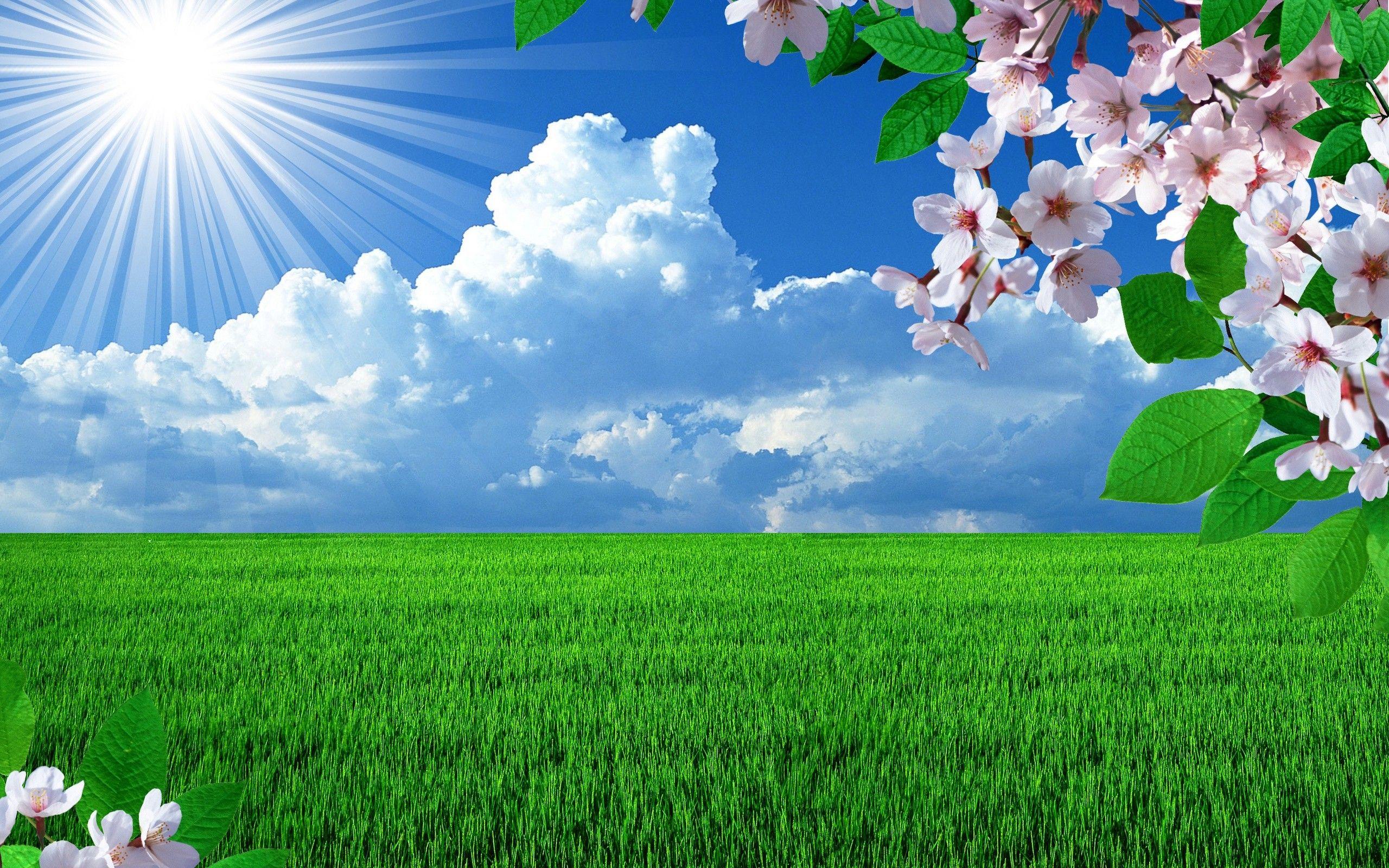 Nature Wallpaper 2560x1600 38815 Beautiful Nature Wallpaper Beautiful Nature Spring Beautiful Nature