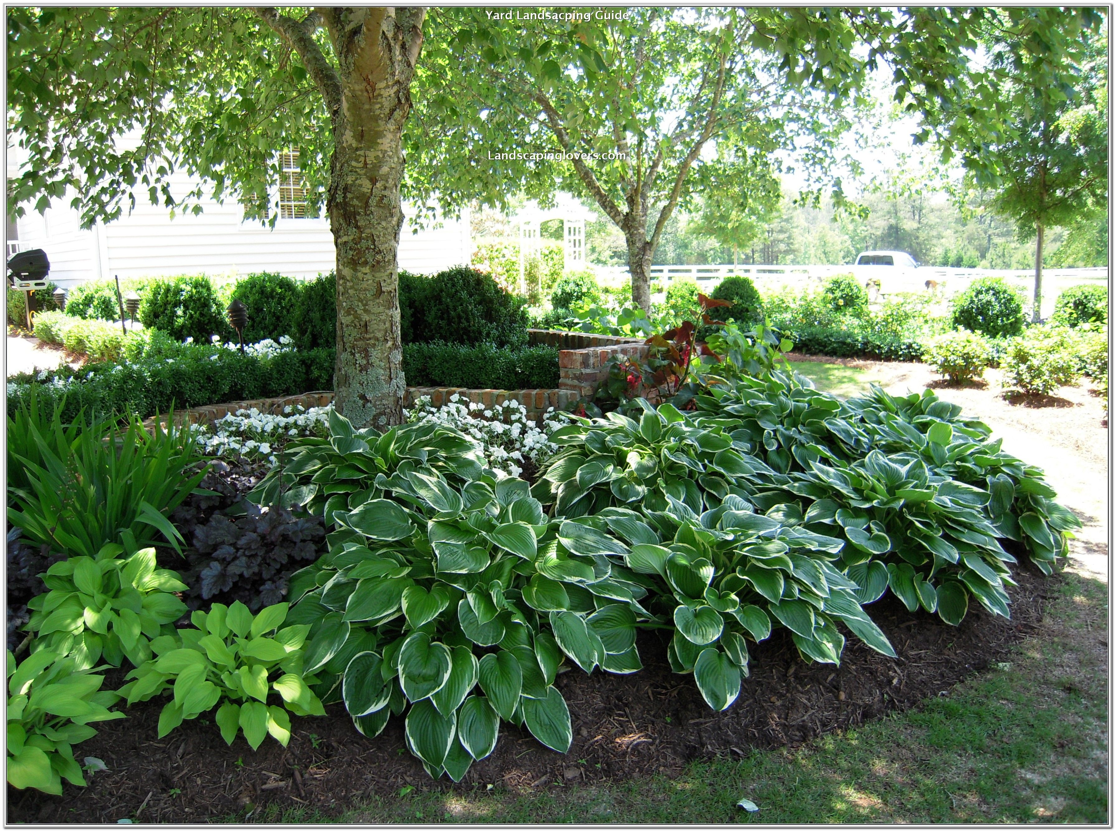 Plants To Buy In A Tropical Landscape Setting Landscaping Lovers Shade Landscaping Shade Garden Backyard Shade
