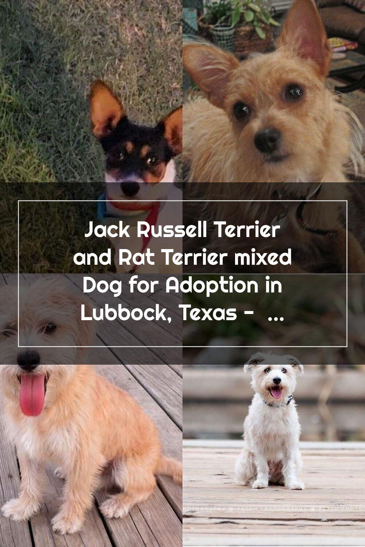 ป กพ นในบอร ด Terrier Mix