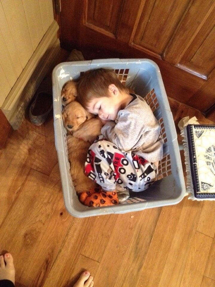 Little Guy Fell Asleep In A Basket With His Golden Retriever Puppies Baby Animals Pictures Funny Animals Cute Kids