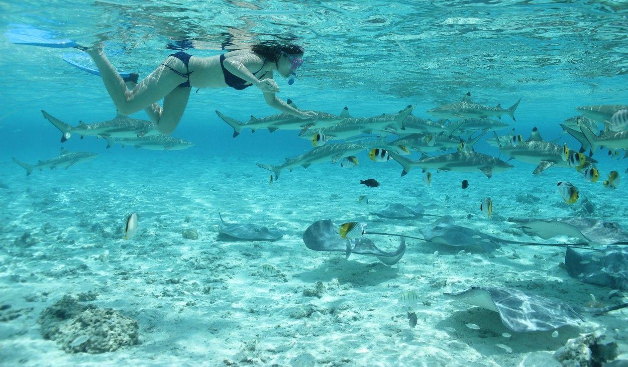 Bora Bora Private Combo Jet ski Sharks and Rays safari | South pacific  travel, Bora bora vacation, Trip to bora bora