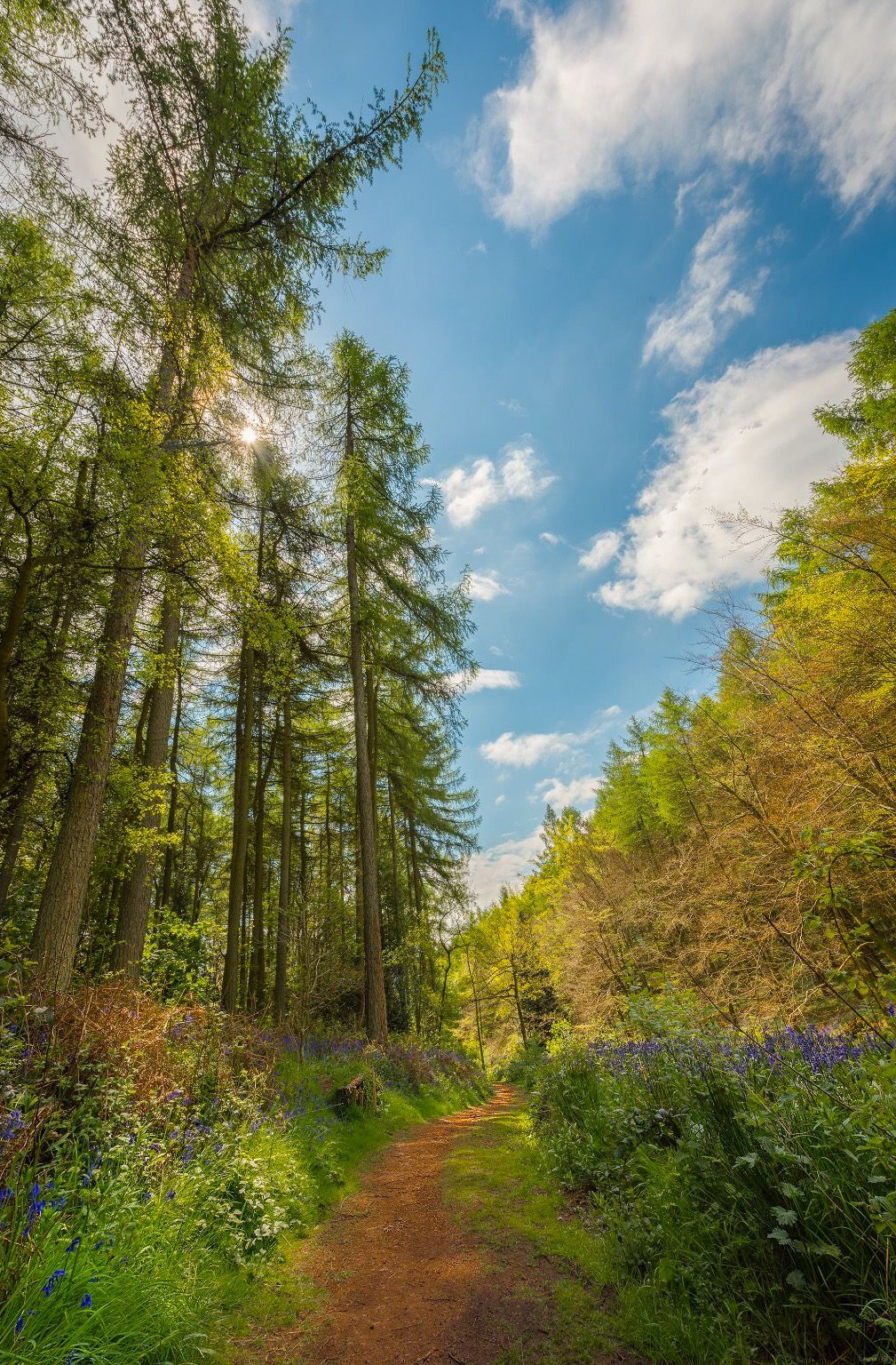 A path in the bluebell woods clent hills england by