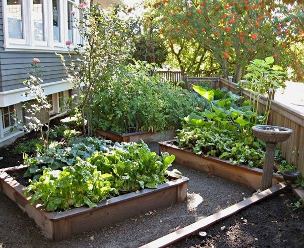 Northwest backyard landscape ideas northwest botanicals for Vegetable garden bed design