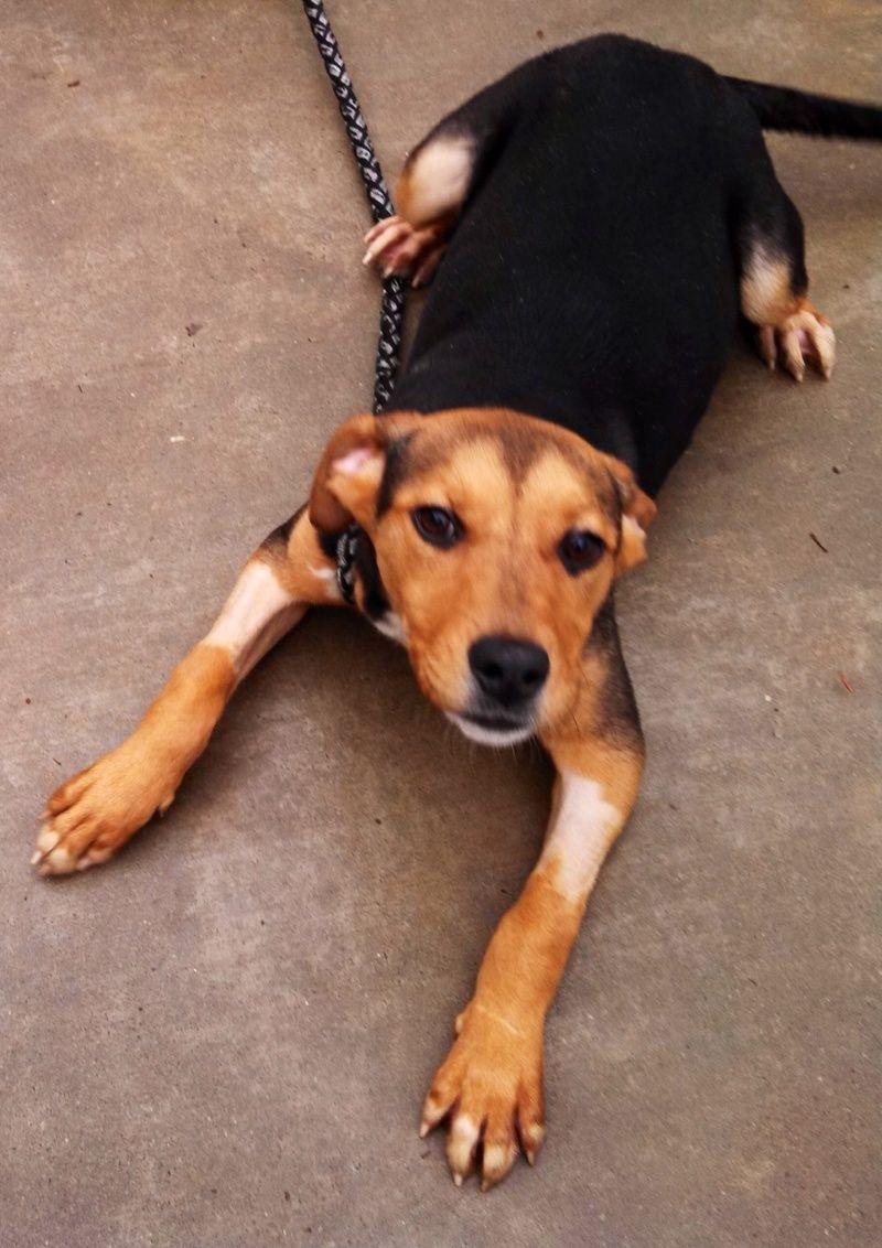 Adopt Sasha on Adoption, Animal rescue, Happy stories