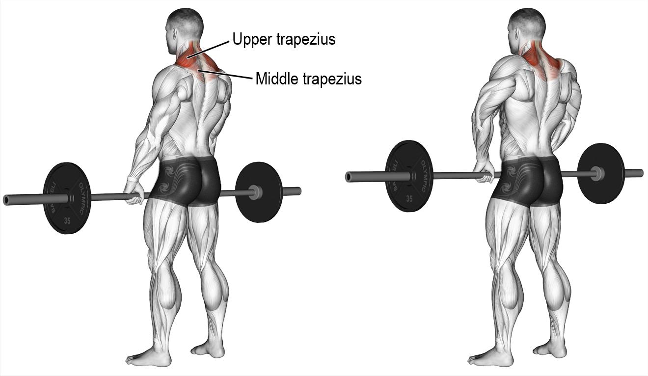 Comment effectuer le shrug barre | Musculation