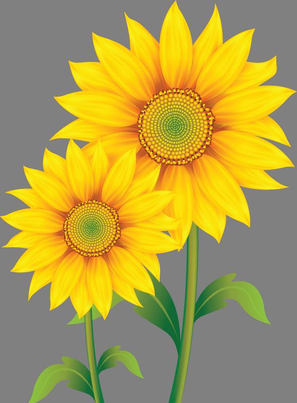 Image du Blog zezete2.centerblog.net | flower | Sunflower ...
