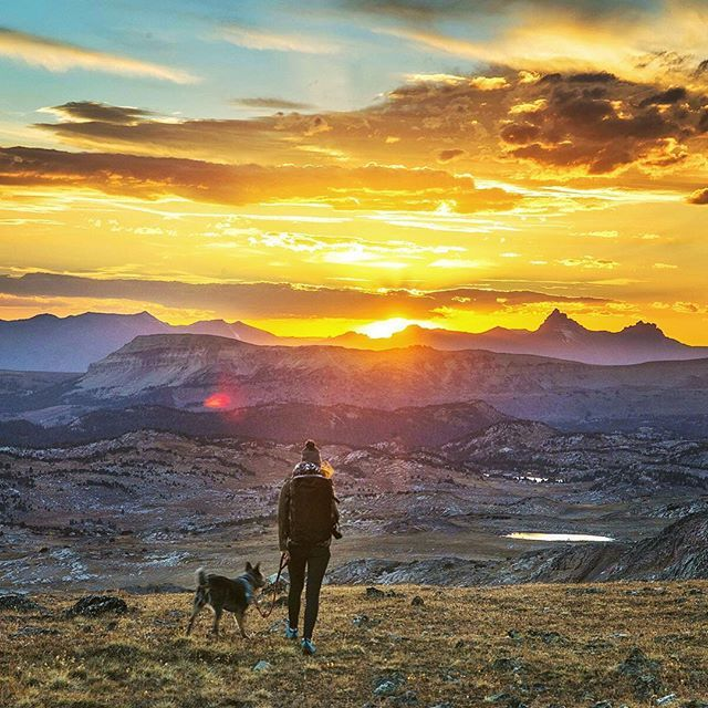 The Top US Cities For Dogs And The Humans Who Love Them - 51 incredible places visit die