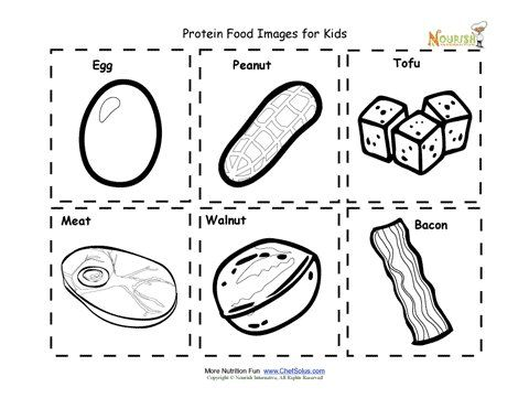 protein food nutrition flash cards cut out printable for
