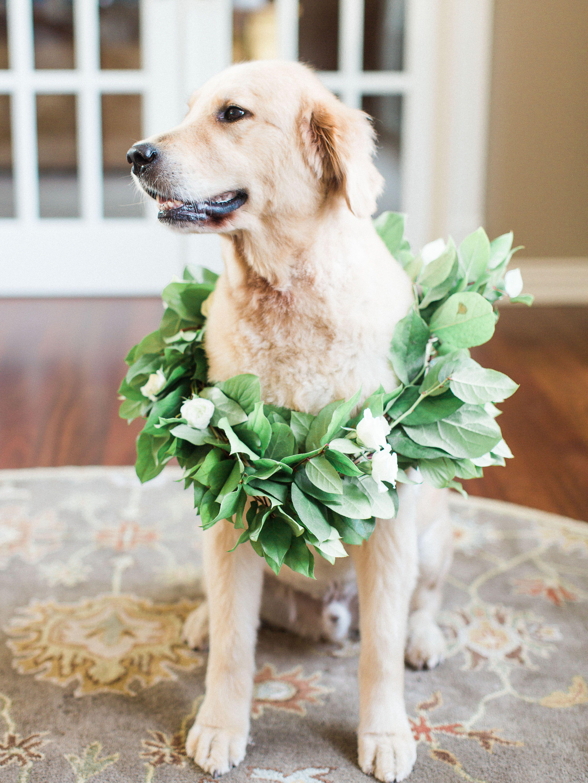 Green Leaf Dog Collar Golden Retriever Wedding Dog Wedding