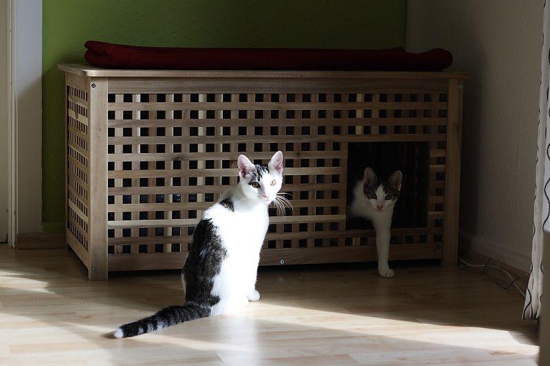 versteck f r die katzentoilette ffnung kann man leicht selber s gen der geruch staut sich. Black Bedroom Furniture Sets. Home Design Ideas