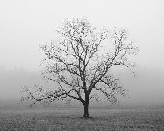 Black and white photography trees tree tree photography lone tree fog