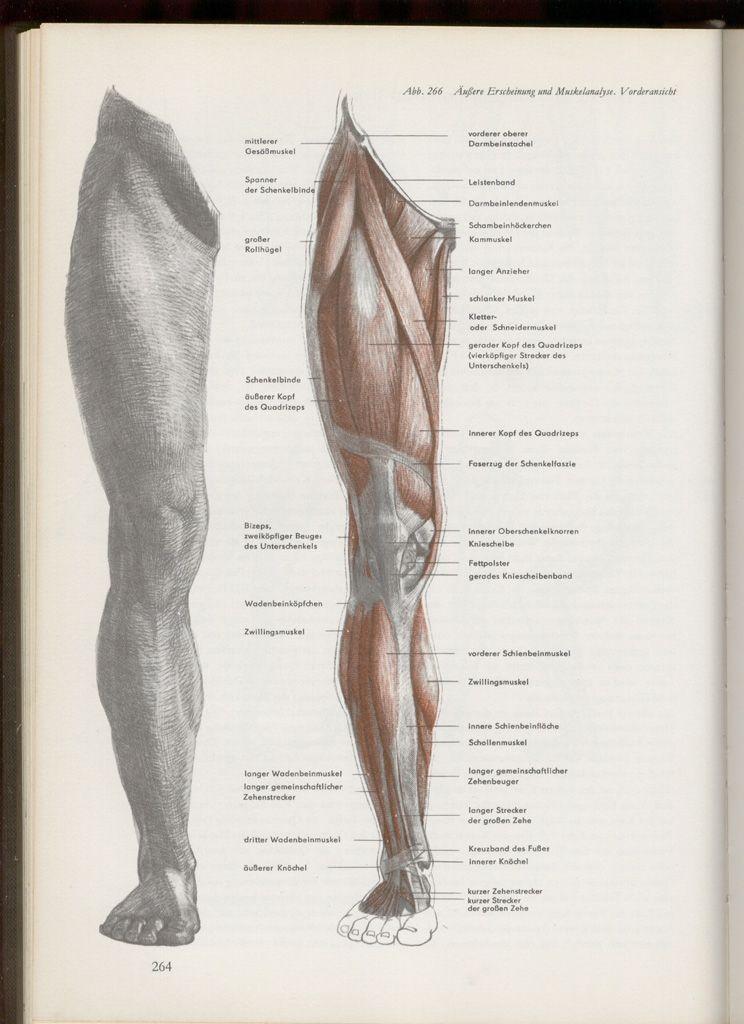anatomia humana dibujo - Buscar con Google | Anatomy | Pinterest ...