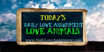 New on the blog { Animal Love} Love The Animals Please Share, sharing is caring <3