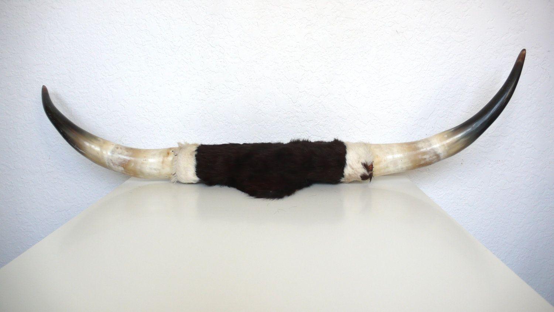 17 Best images about Bull Horns on Pinterest   Horns, Skull ...
