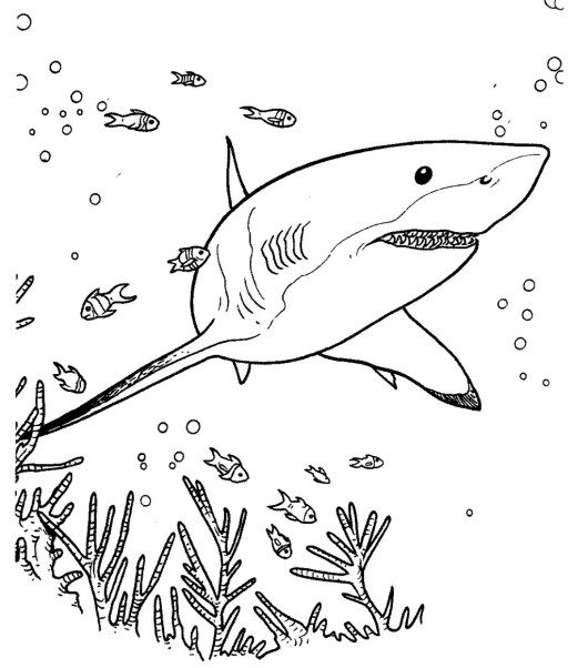 shark ocean coloring page JAWS Pinterest Shark, Underwater - copy coloring page of a tiger shark