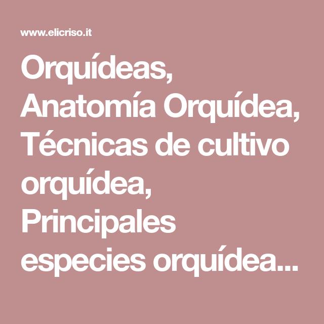 Orquídeas, Anatomía Orquídea, Técnicas de cultivo orquídea ...