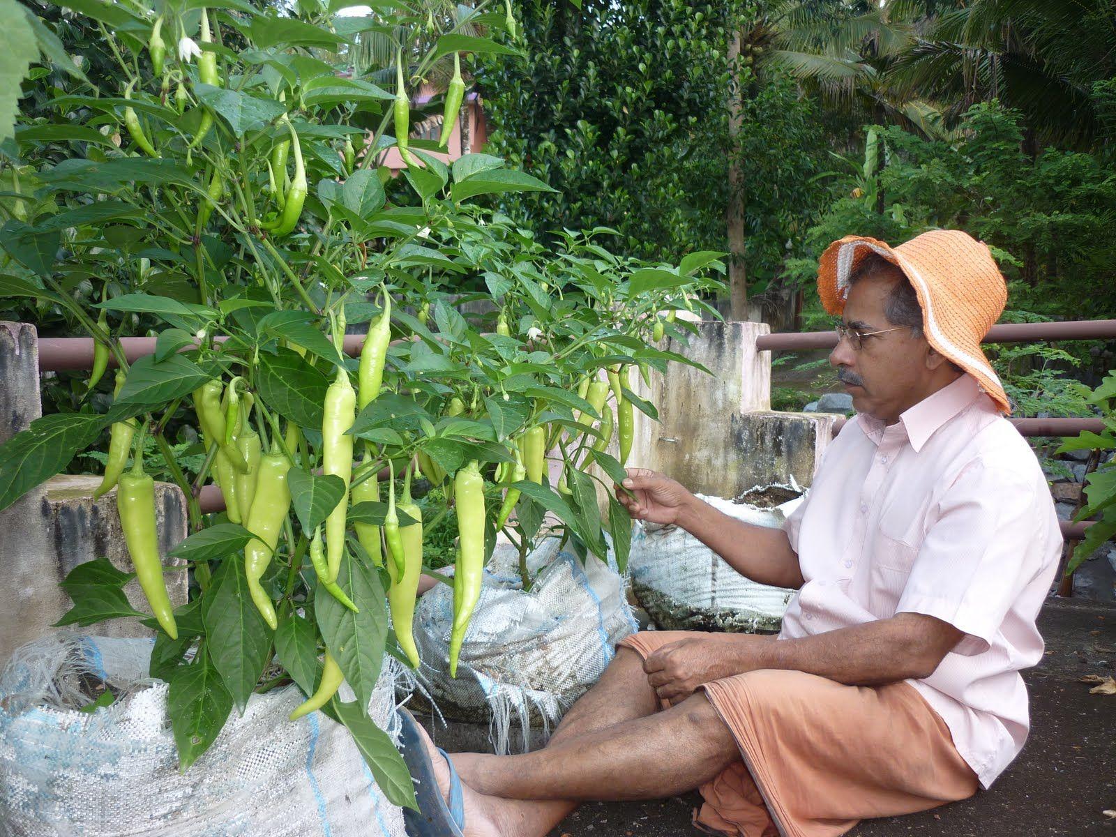 10 Terrace Vegetable Garden Ideas Incredible And Lovely Terraced Vegetable Garden Vegetable Garden Kitchen Garden