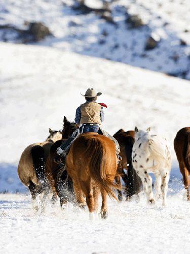 Little Cowboy Rides At The Hideout Winter Horse Horse Photos