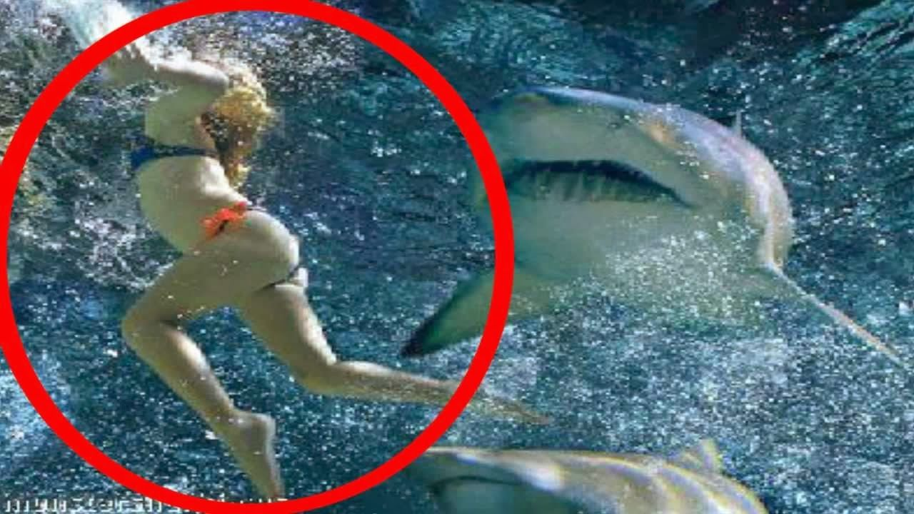 Shark Attacks Human Latest Photos 2014 Beautiful And Dangerous