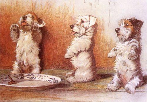 SEALYHAM-TERRIER-DANDIE-DINMONT-PUPPY-DOG-ART-PRINT-by-CECIL-ALDIN