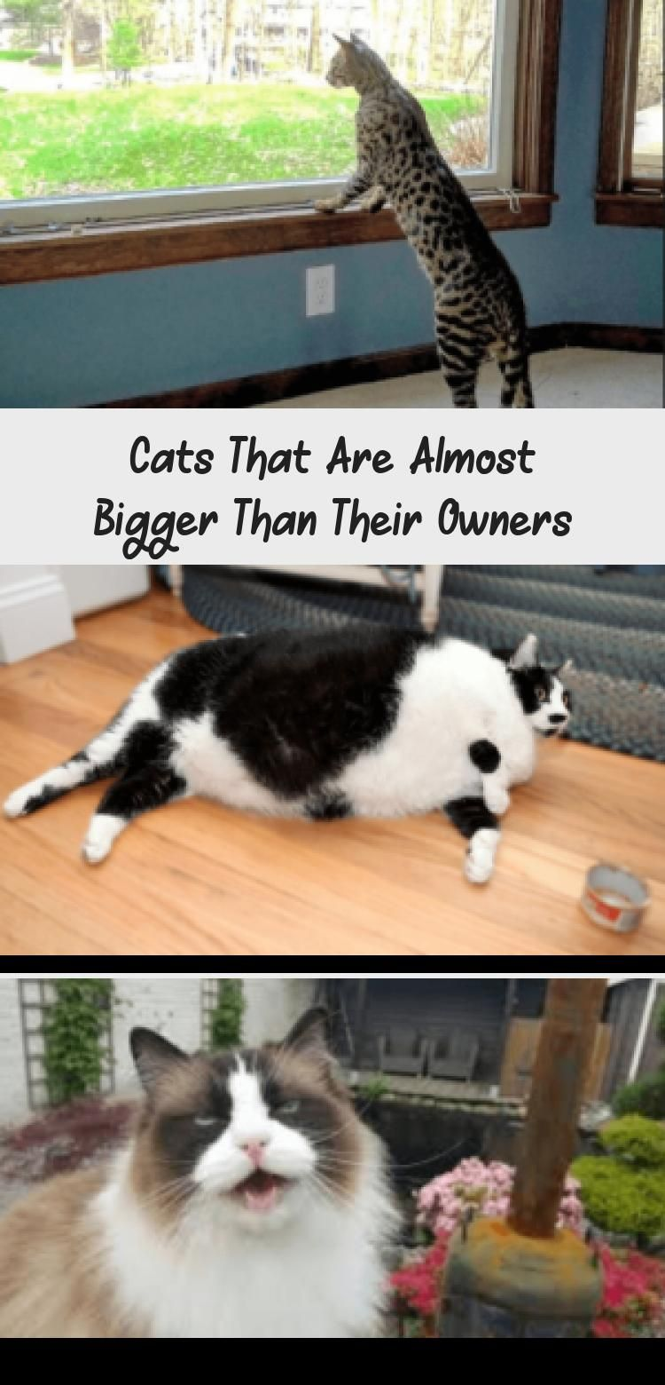 Usually known as independence and small animals. Cats have