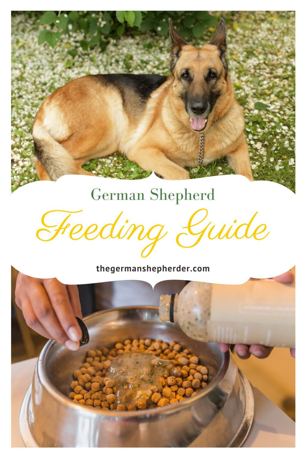 German shepherd feeding guide all you need to know the