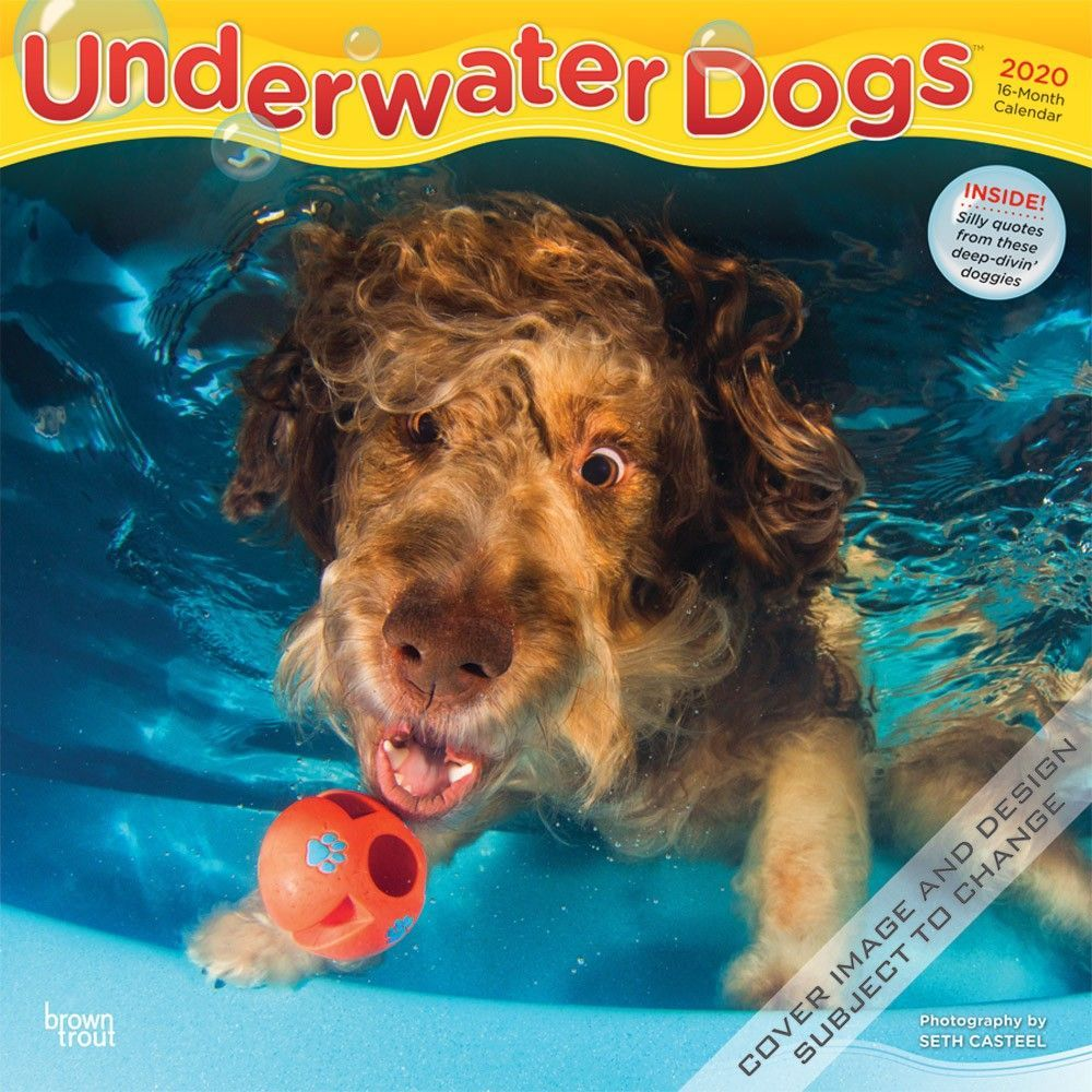 Underwater Dogs 2020 12 X 12 Inch Monthly Square Wall Calendar