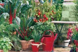 Un balcon potager conseils Plantes du potager et fruitiers pour balcons et terrasses Truffaut