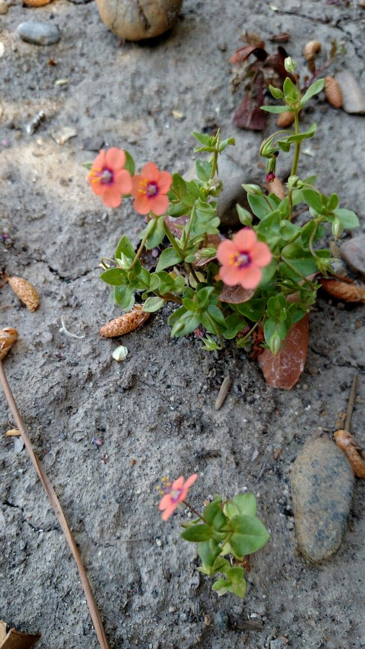 Pin By Diana Eichhorn On Nature Rocks Plants Garden Nature