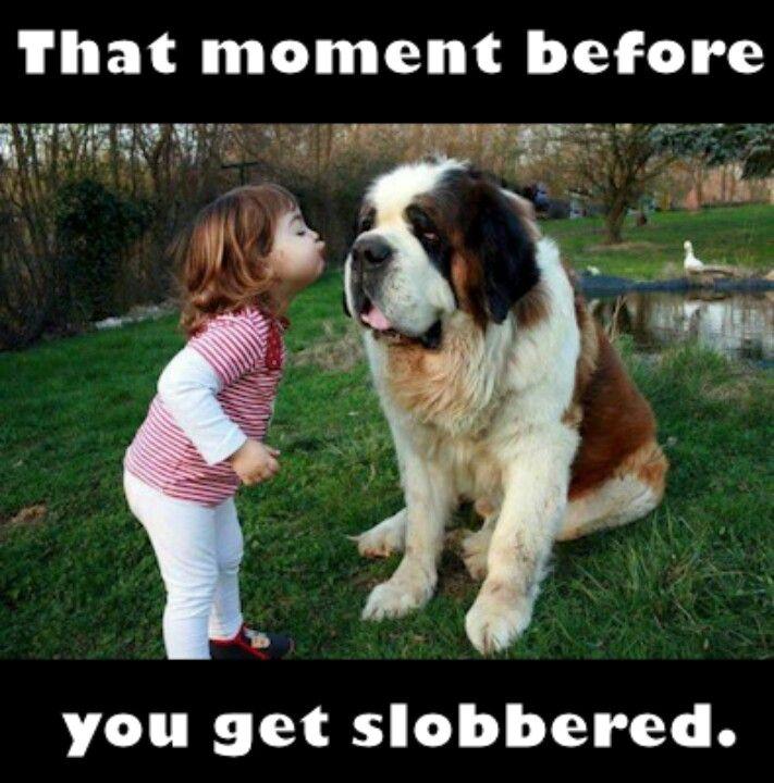Slobber up