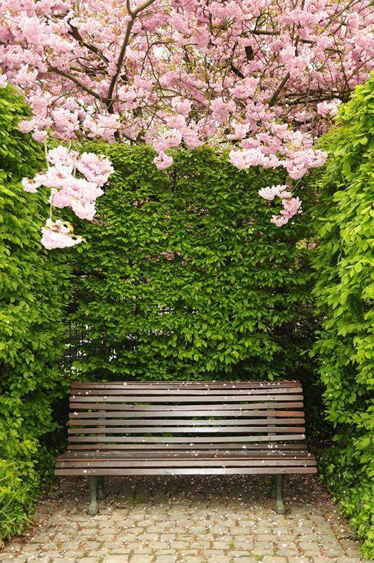 Garden Design Timeline Photos Garden Design Pink Trees Garden Seating