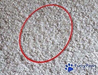 Cat Odor Carpet Cleaner
